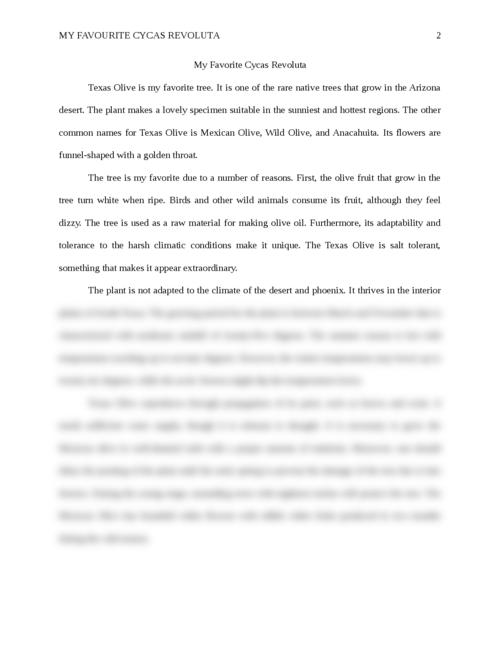 My Favorite Cycas Revoluta - Page 2